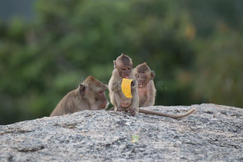 Χαριτωμένες ζωές πιθήκων πιθήκων Α χαριτωμένες σε ένα φυσικό δάσος στοκ φωτογραφία