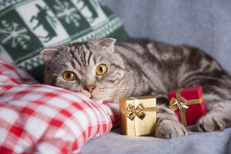 Χαριτωμένες σκωτσέζικες πτυχές με τα κιβώτια δώρων στον γκρίζο καναπέ στοκ φωτογραφία