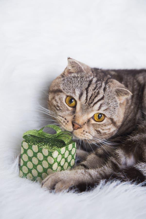 Χαριτωμένες σκωτσέζικες πτυχές με το πράσινο κιβώτιο δώρων στην άσπρη γούνα στοκ φωτογραφίες με δικαίωμα ελεύθερης χρήσης