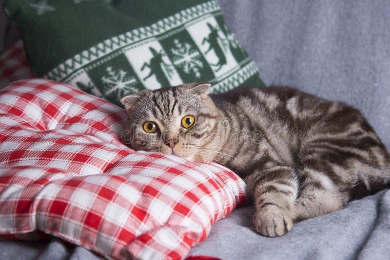 Χαριτωμένες σκωτσέζικες πτυχές που βρίσκονται στον γκρίζο καναπέ στοκ εικόνες