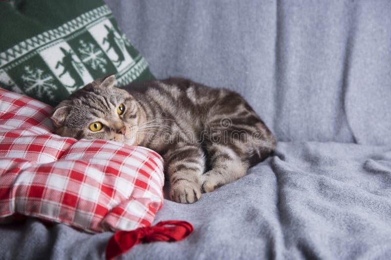 Χαριτωμένες σκωτσέζικες πτυχές που βρίσκονται στον γκρίζο καναπέ στοκ φωτογραφία με δικαίωμα ελεύθερης χρήσης