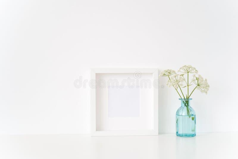 Χαριτωμένη άσπρη τετραγωνική χλεύη πλαισίων επάνω με ένα Aegopodium στο διαφανές μπλε βάζο Πρότυπο για το απόσπασμα, προώθηση, τί στοκ εικόνες