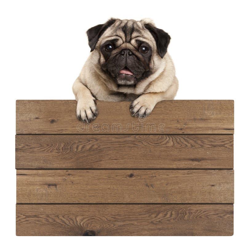 Χαριτωμένη ένωση σκυλιών κουταβιών μαλαγμένου πηλού χαμόγελου με τα πόδια στο κενό ξύλινο προωθητικό σημάδι στοκ εικόνες