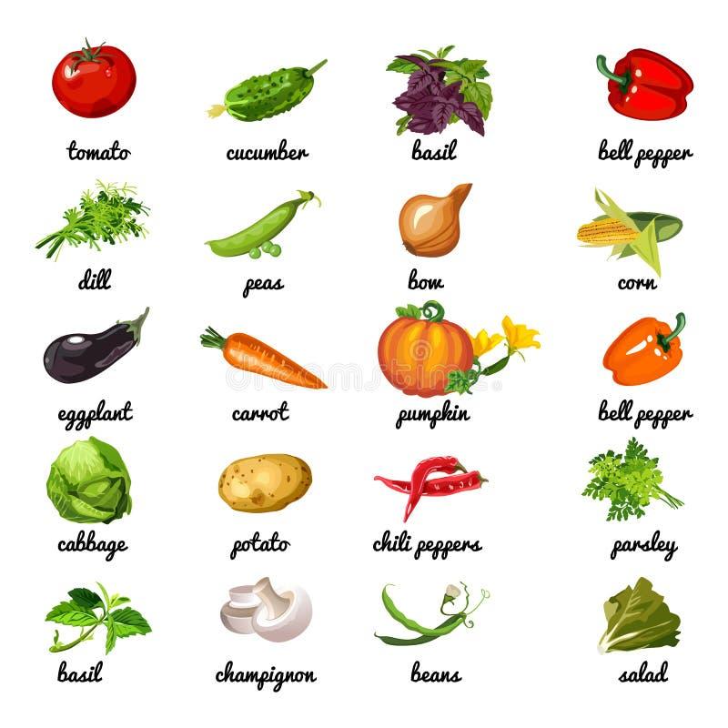Χαριτωμένη αφίσα στο θέμα της υγιεινής διατροφής Τα λαχανικά και τα χορτάρια είναι πλούσια σε ίνα Κάρτα δειγμάτων, κάλυψη για το  διανυσματική απεικόνιση