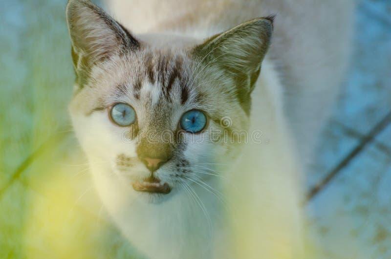 Χαριτωμένη γάτα με τα μπλε μάτια που παίζουν μέσα σε μια κενή λίμνη στοκ εικόνα με δικαίωμα ελεύθερης χρήσης