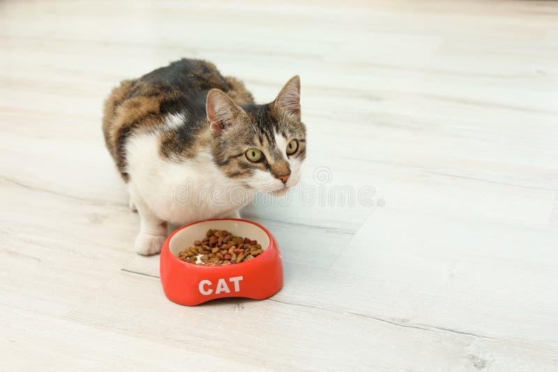 Χαριτωμένη γάτα που τρώει τα ξηρά τρόφιμα από το κύπελλο στοκ φωτογραφίες με δικαίωμα ελεύθερης χρήσης