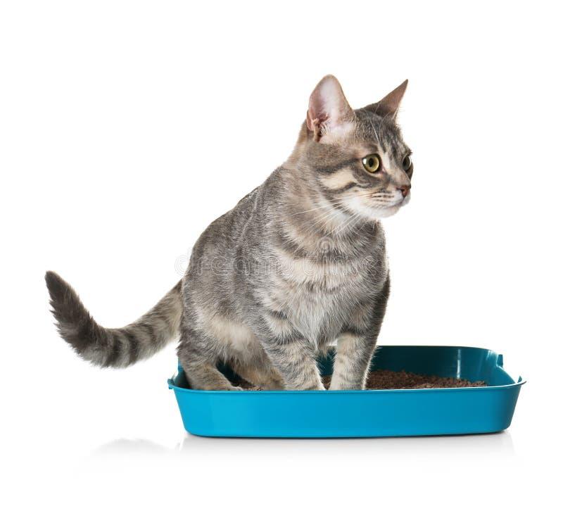 Χαριτωμένη γάτα στο πλαστικό κιβώτιο απορριμάτων που απομονώνεται στοκ φωτογραφία