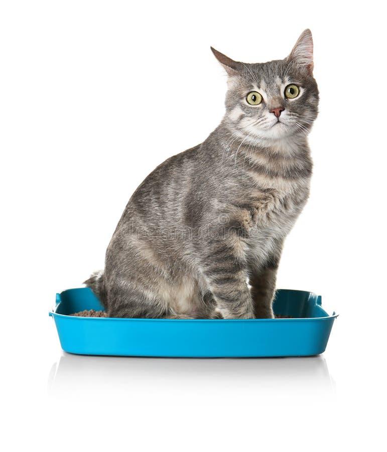 Χαριτωμένη γάτα στο πλαστικό κιβώτιο απορριμάτων που απομονώνεται στοκ φωτογραφία με δικαίωμα ελεύθερης χρήσης