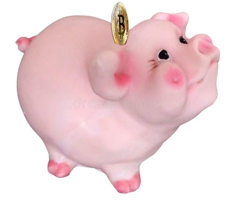 Χαριτωμένη γοητευτική piggy τράπεζα με το νόμισμα bitcoin, σύμβολο 2019 στοκ φωτογραφία