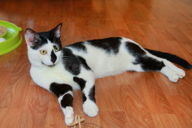 Χαριτωμένη γραπτή εσωτερική γάτα που βρίσκεται στο πάτωμα στοκ φωτογραφία