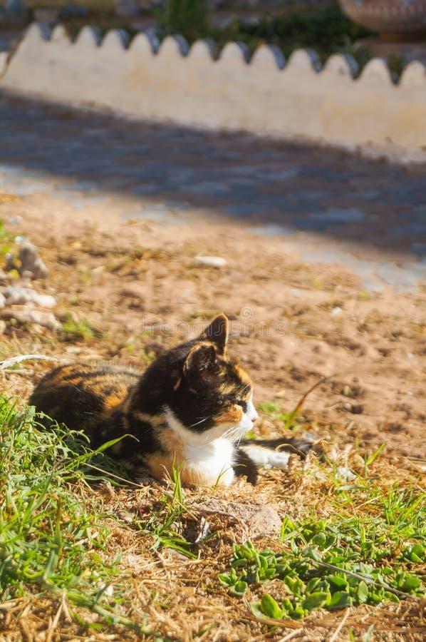 Χαριτωμένη ζωηρόχρωμη γάτα που καθορίζει πίσω από την πράσινη χλόη στοκ εικόνα
