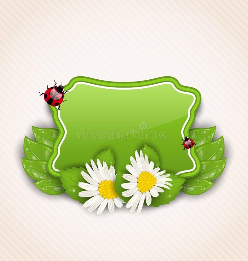 Χαριτωμένη κάρτα άνοιξη με τις μαργαρίτες λουλουδιών, φύλλα, ladybugs διανυσματική απεικόνιση