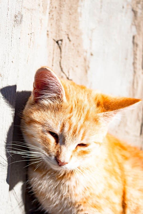 Χαριτωμένη, καλή ζωική κόκκινη, πορτοκαλιά και άσπρη συνεδρίαση γατών  στοκ εικόνες