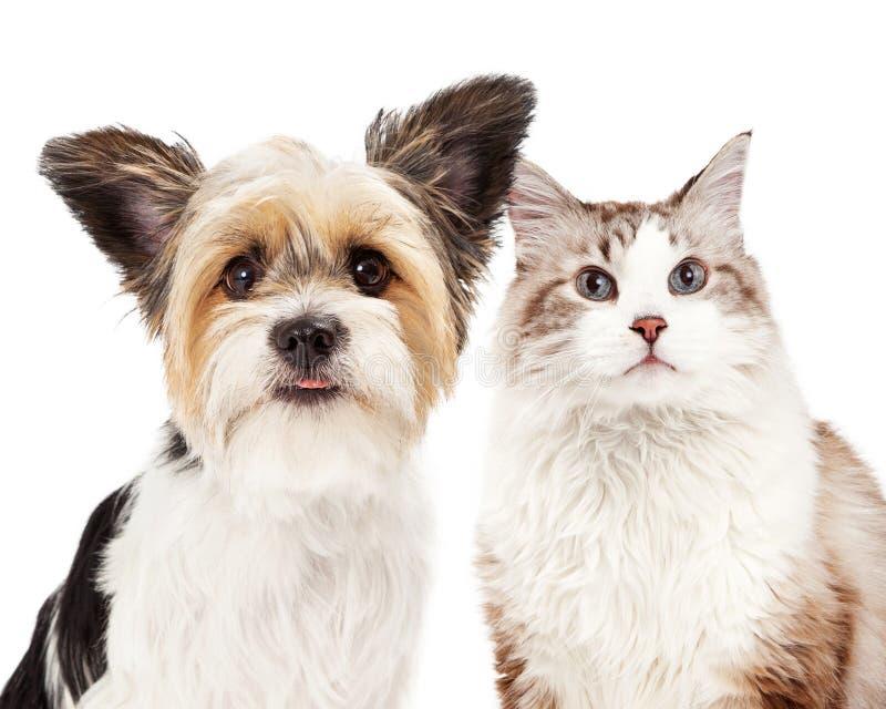 Χαριτωμένη κινηματογράφηση σε πρώτο πλάνο σκυλιών και γατών στοκ εικόνες