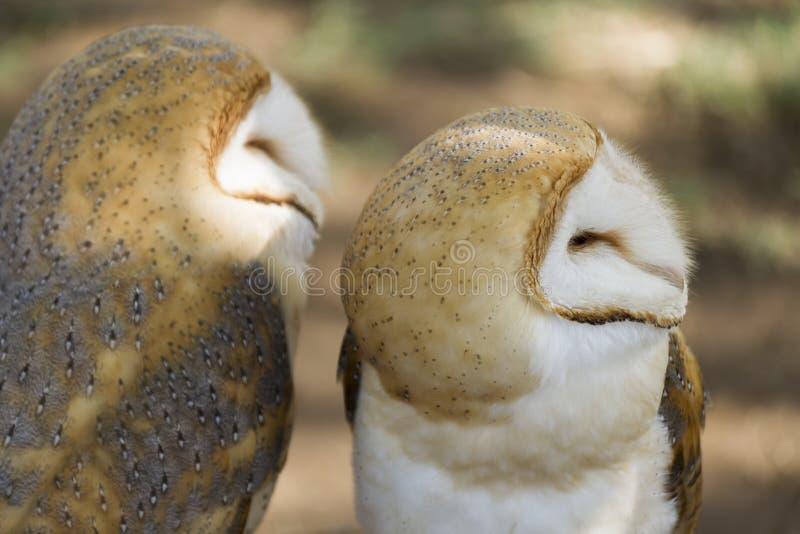 χαριτωμένη κουκουβάγια στοκ φωτογραφίες με δικαίωμα ελεύθερης χρήσης