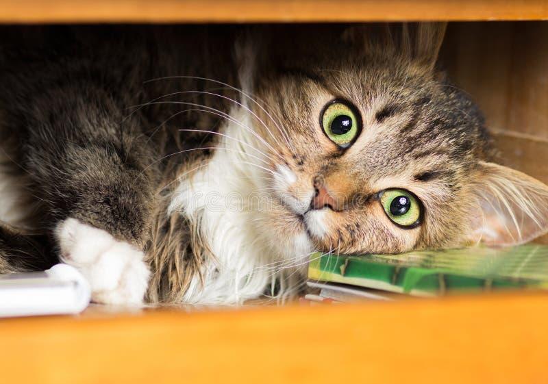Χαριτωμένη κόκκινη γάτα που βρίσκεται στο ντουλάπι στο ράφι με τα πράγματα στοκ φωτογραφίες με δικαίωμα ελεύθερης χρήσης