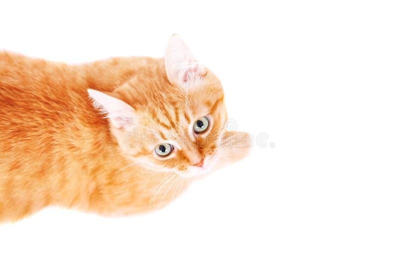 Χαριτωμένη κόκκινη γάτα που βρίσκεται στο πάτωμα, που ανατρέχει στοκ εικόνες