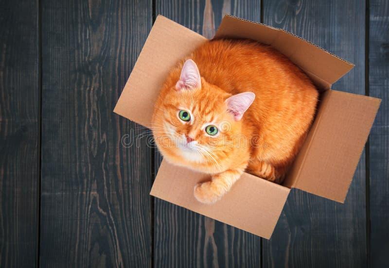 Χαριτωμένη κόκκινη γάτα σε ένα κουτί από χαρτόνι στοκ φωτογραφία