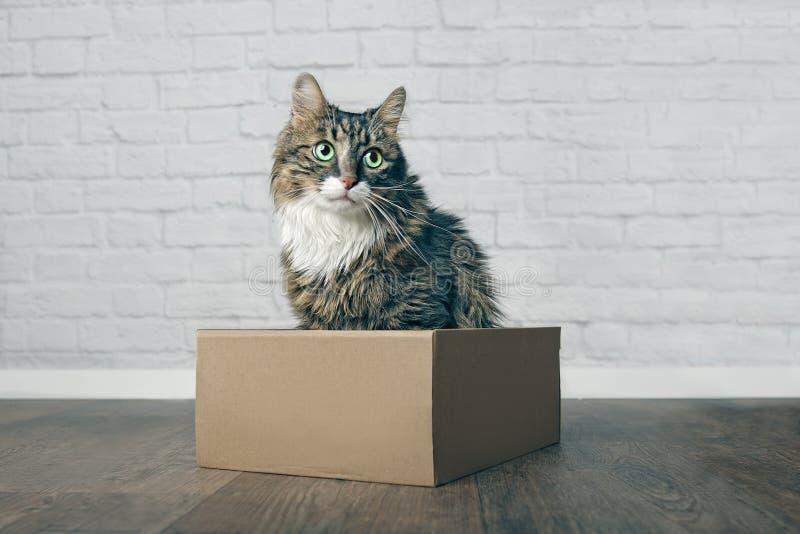 Χαριτωμένη μακρυμάλλης συνεδρίαση γατών σε ένα κουτί από χαρτόνι και κοίταγμα λοξά στοκ φωτογραφία