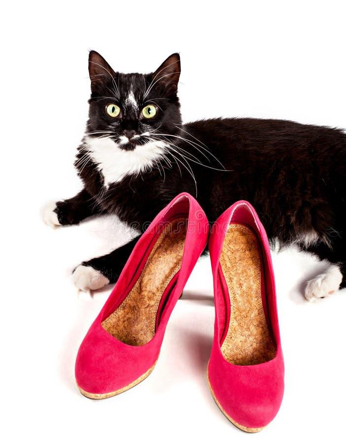 Χαριτωμένη μαύρος-άσπρη γάτα με τα παπούτσια των γυναικών στοκ εικόνες
