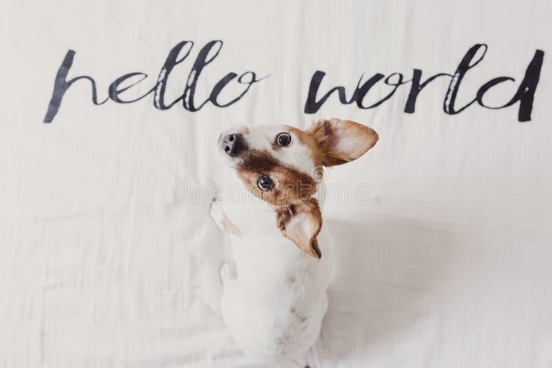 Χαριτωμένη μικρή συνεδρίαση σκυλιών στο κρεβάτι άσπρο φύλλο με γειά σου το παγκόσμιο μήνυμα Κατοικίδια ζώα στο εσωτερικό Χαλαρώστ στοκ φωτογραφίες με δικαίωμα ελεύθερης χρήσης