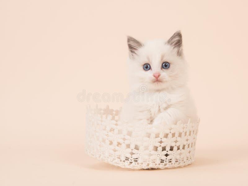 Χαριτωμένη μωρών κουρελιών γάτα μωρών κουκλών μακρυμάλλης με τα μπλε μάτια ι στοκ φωτογραφία