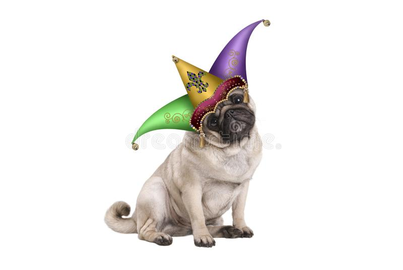 Χαριτωμένη συνεδρίαση σκυλιών κουταβιών μαλαγμένου πηλού καρναβαλιού gras της Mardi κάτω με jester harlequin το καπέλο στοκ εικόνες