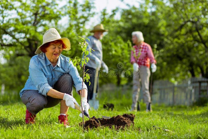 Χαριτωμένη συνταξιούχος γυναίκα που φορά το σκάβοντας έδαφος καπέλων κοντά στο δέντρο στοκ εικόνες