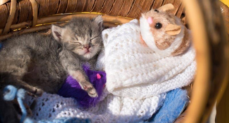 Χαριτωμένοι γλυκοί ύπνοι λίγων γατακιών σε ένα καλάθι με το πλέξιμο και mi στοκ φωτογραφία με δικαίωμα ελεύθερης χρήσης