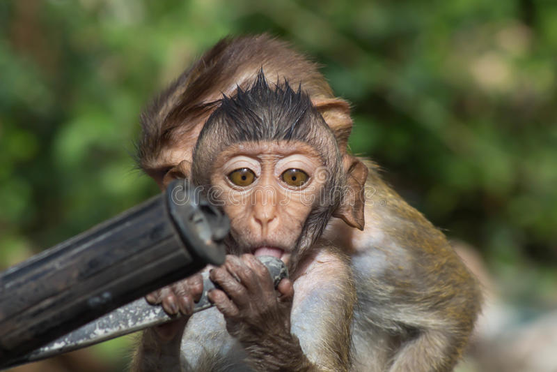 Χαριτωμένοι πίθηκοι στοκ εικόνες