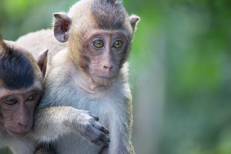 Χαριτωμένοι πίθηκοι στοκ φωτογραφίες με δικαίωμα ελεύθερης χρήσης