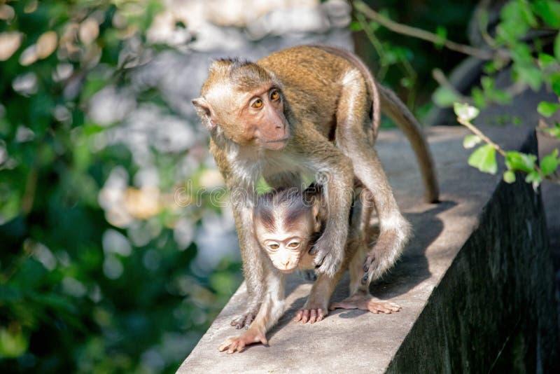 Χαριτωμένοι πίθηκοι στοκ εικόνα με δικαίωμα ελεύθερης χρήσης