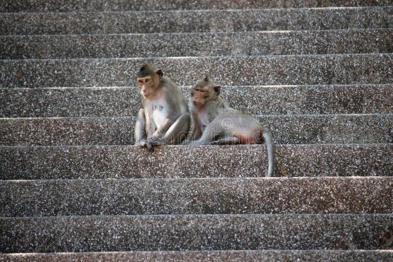 Χαριτωμένοι πίθηκοι στοκ εικόνες με δικαίωμα ελεύθερης χρήσης