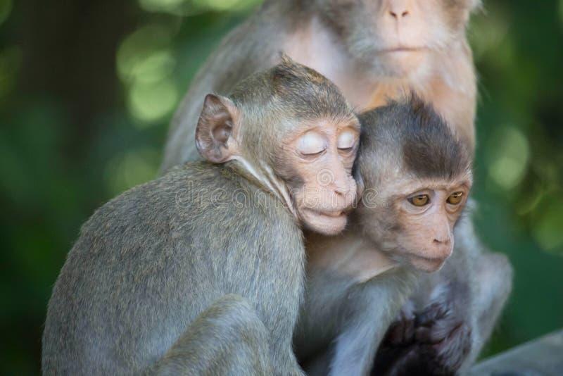 Χαριτωμένοι πίθηκοι στοκ φωτογραφία με δικαίωμα ελεύθερης χρήσης