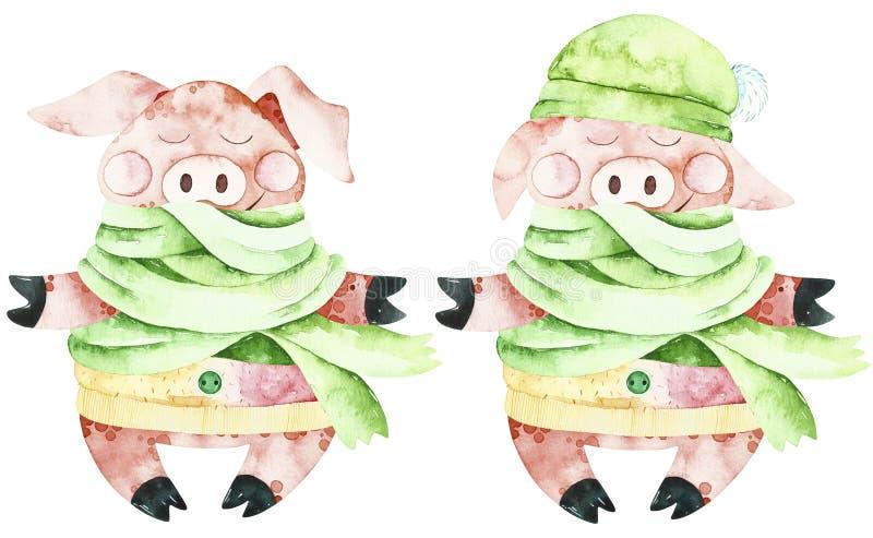 Χαριτωμένοι χοίροι Χριστουγέννων Watercolor ελεύθερη απεικόνιση δικαιώματος