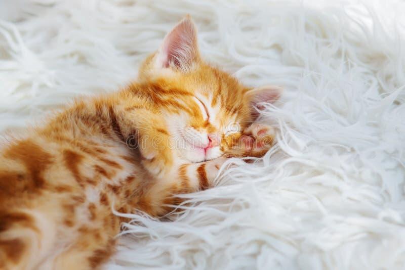 Χαριτωμένοι ύπνοι λίγων κόκκινοι γατακιών στο λευκό γουνών στοκ φωτογραφία με δικαίωμα ελεύθερης χρήσης