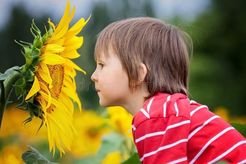 Χαριτωμένος λίγο παιδί, που κρατά το μεγάλο λουλούδι ηλίανθων σε έναν τομέα στοκ εικόνες με δικαίωμα ελεύθερης χρήσης