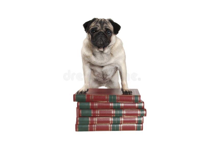 Χαριτωμένος λίγο σκυλί μαλαγμένου πηλού που στέκεται στα βιβλία με τα μπροστινά πόδια στοκ φωτογραφίες
