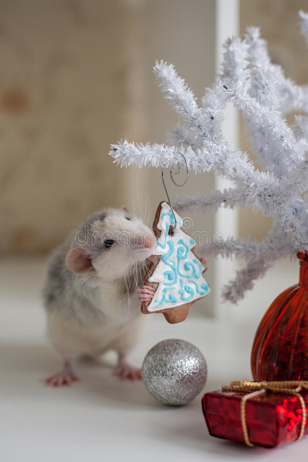 Χαριτωμένος αστείος αρουραίος σε ένα υπόβαθρο των διακοσμήσεων Χριστουγέννων στοκ εικόνα