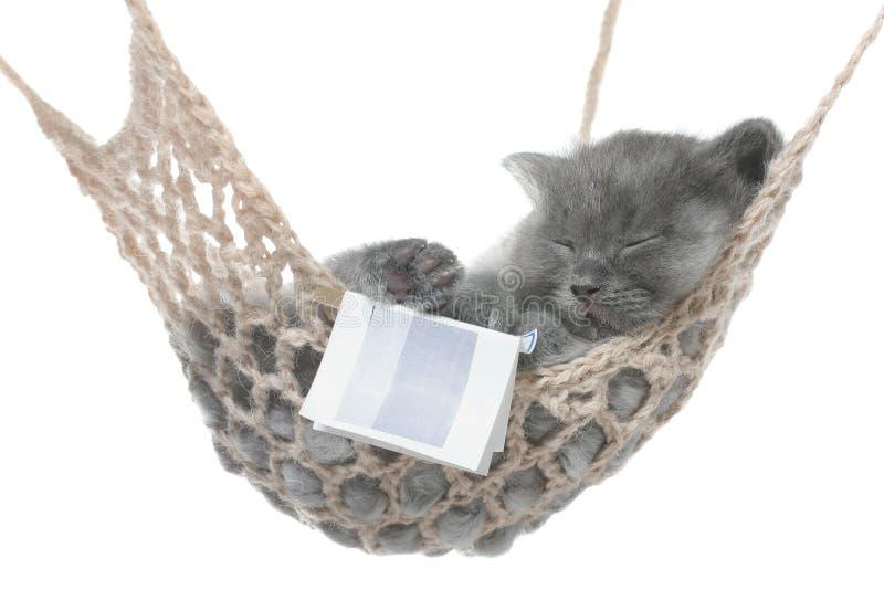 Χαριτωμένος γκρίζος ύπνος γατακιών στην αιώρα με το ανοικτό βιβλίο. στοκ εικόνες