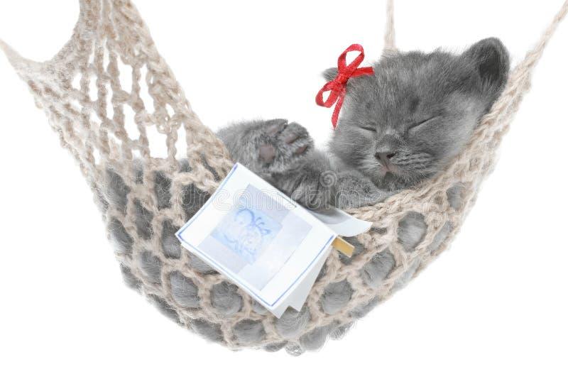 Χαριτωμένος γκρίζος ύπνος γατακιών στην αιώρα με το ανοικτό βιβλίο στοκ εικόνα