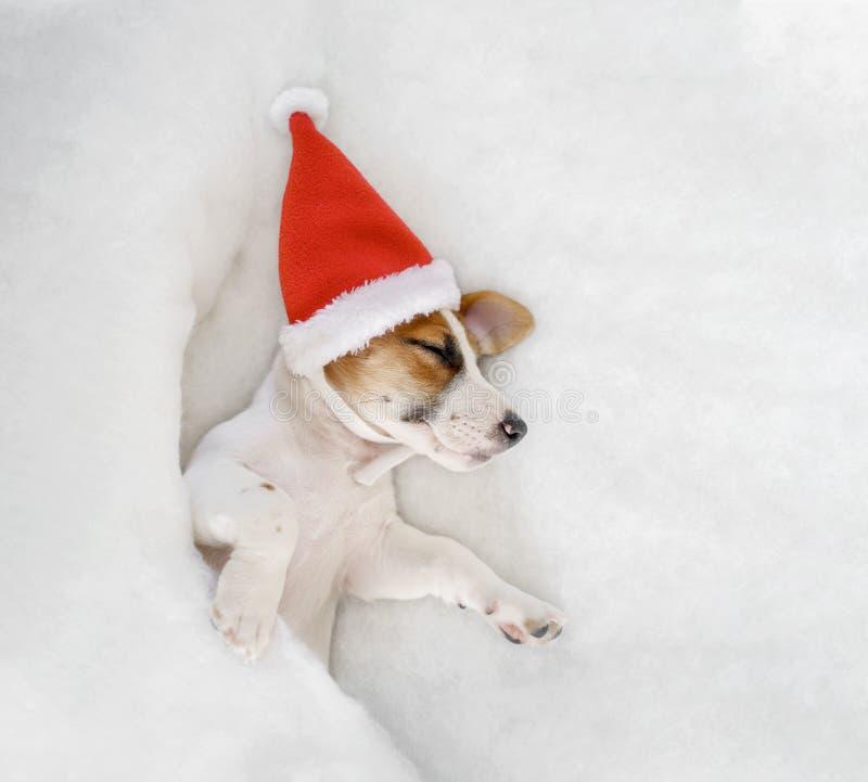 Χαριτωμένος γρύλος Russell κουταβιών στο καπέλο Santa στοκ εικόνες