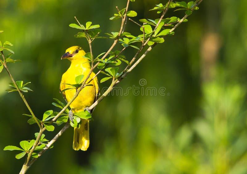 χαριτωμένος κίτρινος που στοκ φωτογραφία