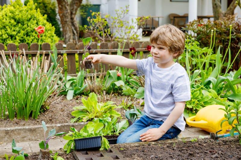 Χαριτωμένος λίγο προσχολικό αγόρι παιδιών που φυτεύει τα πράσινα σπορόφυτα σαλάτας την άνοιξη στοκ εικόνες
