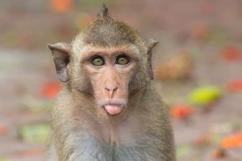 χαριτωμένος πίθηκος στοκ εικόνα
