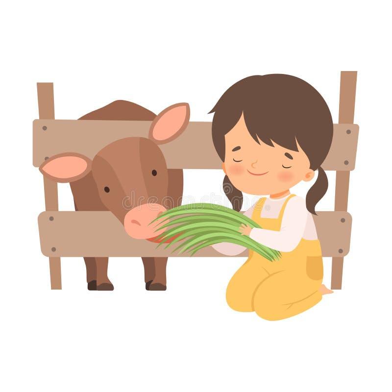 Χαριτωμένος ταΐζοντας μόσχος μικρών κοριτσιών με τη χλόη, λατρευτό παιδί που φροντίζει για το ζώο στη διανυσματική απεικόνιση αγρ ελεύθερη απεικόνιση δικαιώματος