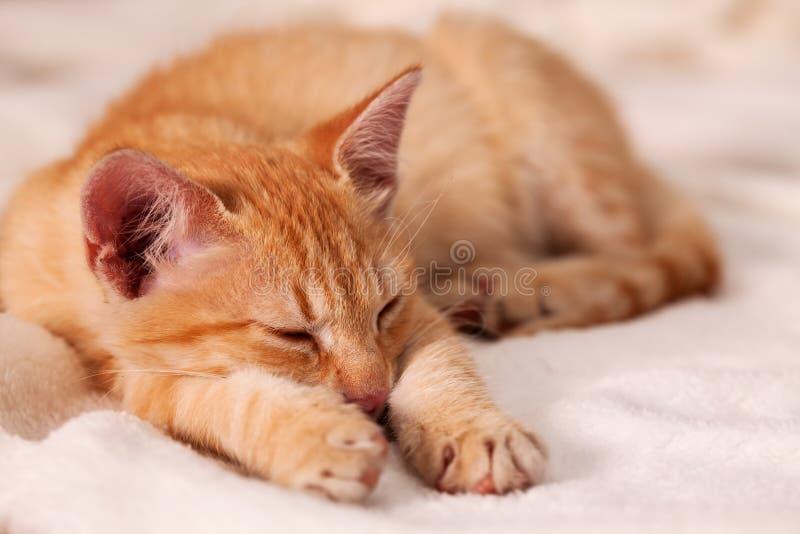 Χαριτωμένος ύπνος γατακιών στο μαλακό άσπρο κάλυμμα - κινηματογράφηση σε πρώτο πλάνο, ρηχό de στοκ εικόνα