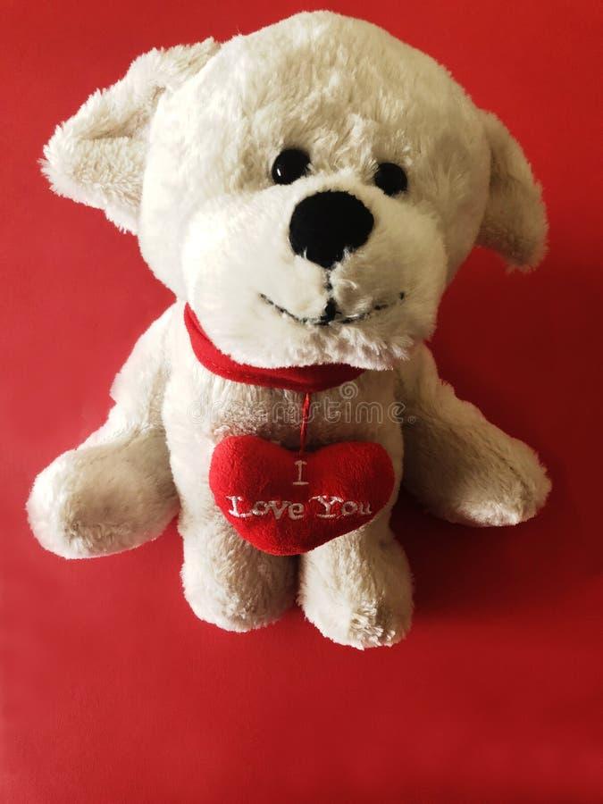 Χαριτωμένο άσπρο σκυλί, κουτάβι με ένα σ' αγαπώ μήνυμα στο κόκκινο υπόβαθρο στοκ φωτογραφίες