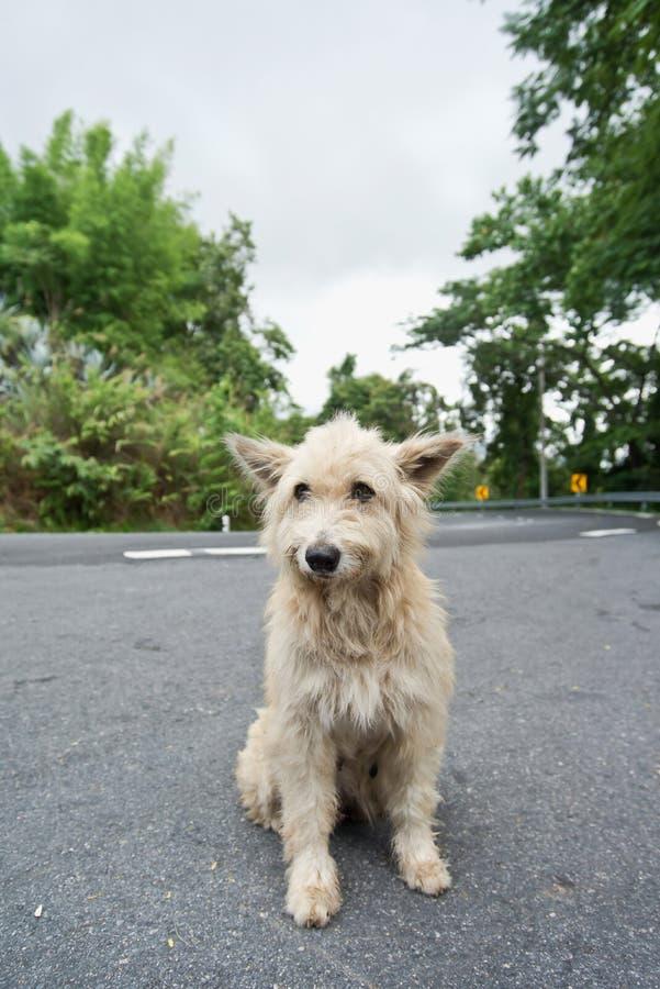 Χαριτωμένο άστεγο περιπλανώμενο σκυλί στοκ φωτογραφίες
