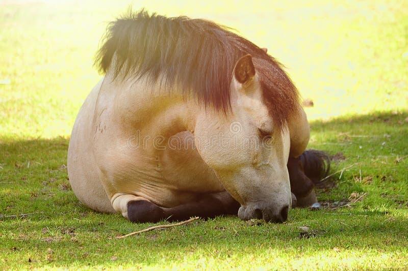 χαριτωμένο άλογο στοκ εικόνα